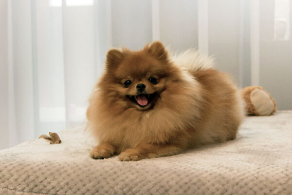 Unsere Haustiere und Begleiter im Alltag